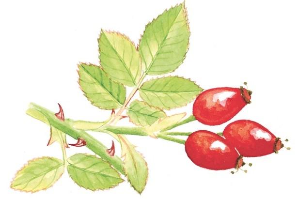 The best botanical illustration books