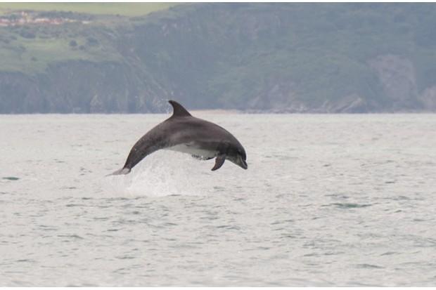 dolphin623-8c5735c