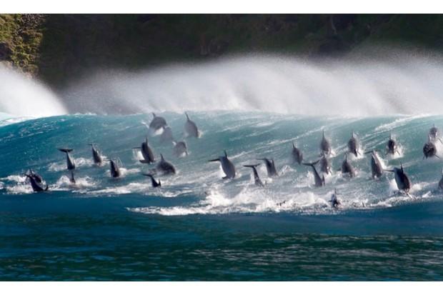 dolphins623-b103e5f
