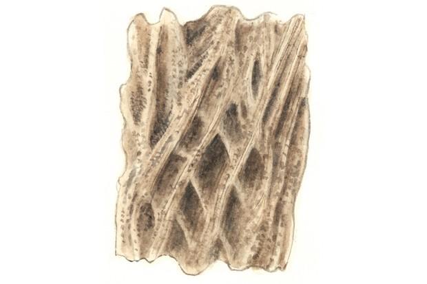 Elder tree bark
