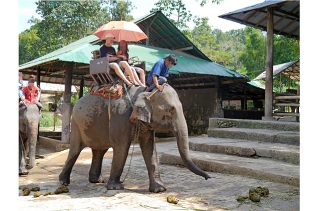 elephant_worldanimalprotection_623-293f5ef