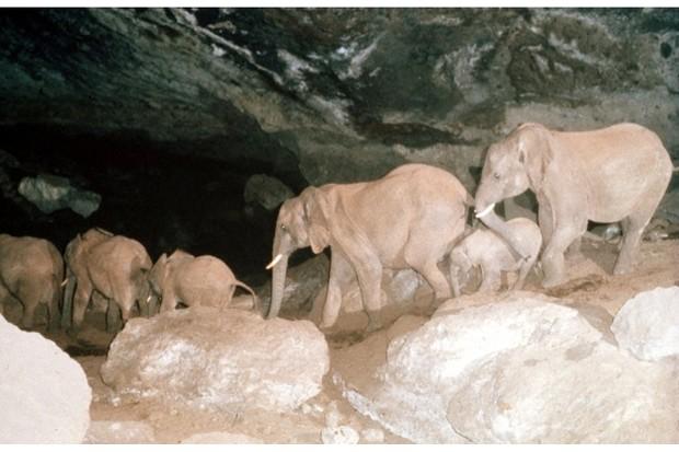 elephantsintoelgon_ianredmond_623-f081c37