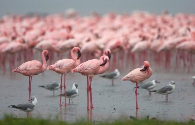 flamingo_joanneknight_623-56a2d13