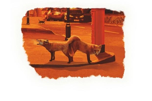 foxcouple_sjc_623-30169a4