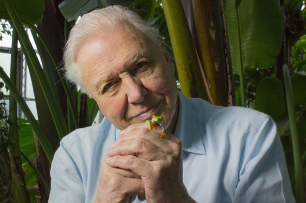 David Attenborough with red-eyed tree frog. © Anna Place/BBC