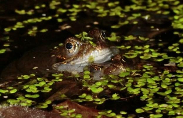 frogs_IngridCawse_623-da44dc7
