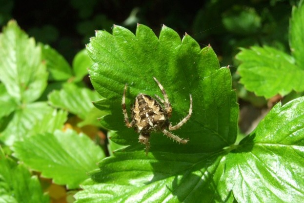 14 incredible spider facts