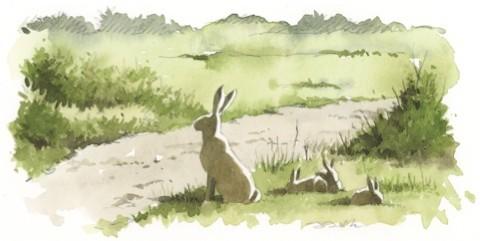 hare-bbc03_480-5a752e4