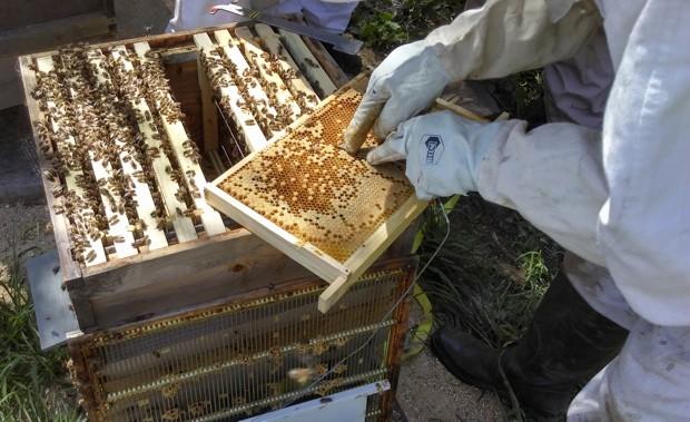 honeybee-main-cca8a8a