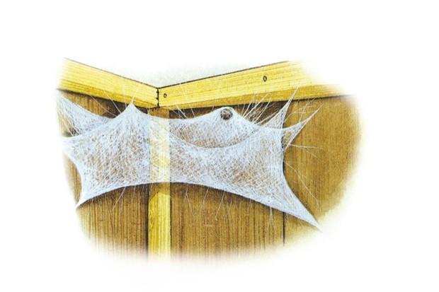 House spider. © Chris Shields