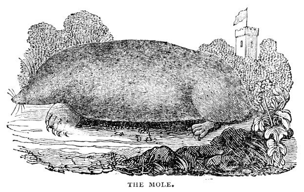 1833 woodcut of a mole.