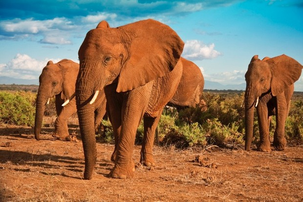 21 amazing elephant facts