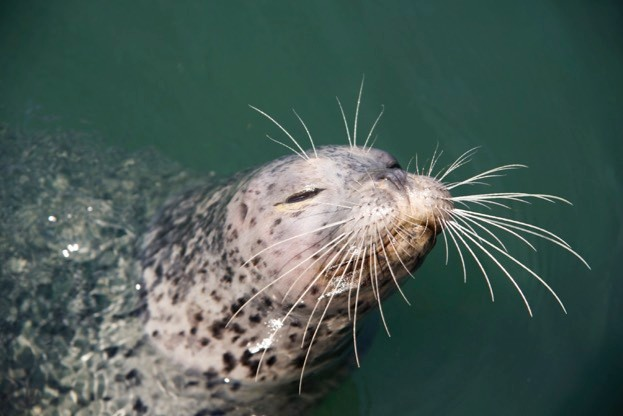 Whiskers are much more widespread and important – in both functional and evolutionary terms – than you might imagine.