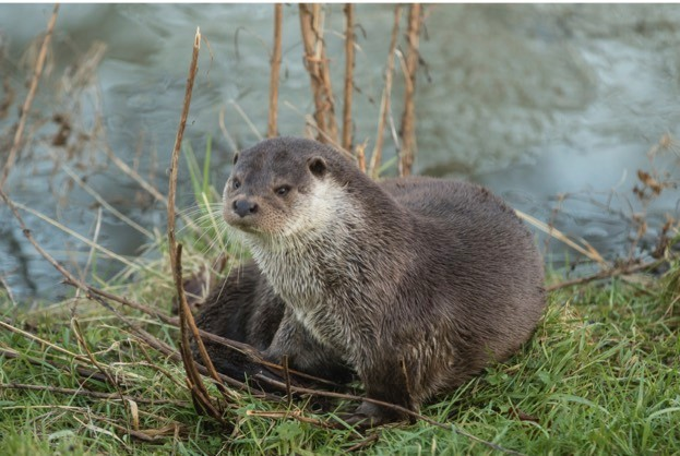 Otter sitting on bank by Frozen Pond