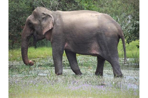 7 amazing elephant facts discover wildlife