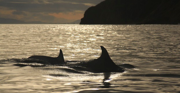 The Moray Firth is home to the last remaining resident group of bottlenose dolphins in the North Sea. © Rebecca-Belleni-Photography/iStock