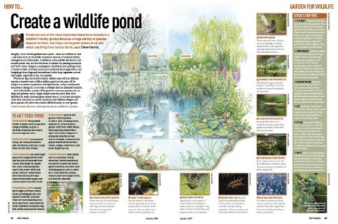 jan_gardening_pond_article-a99963a