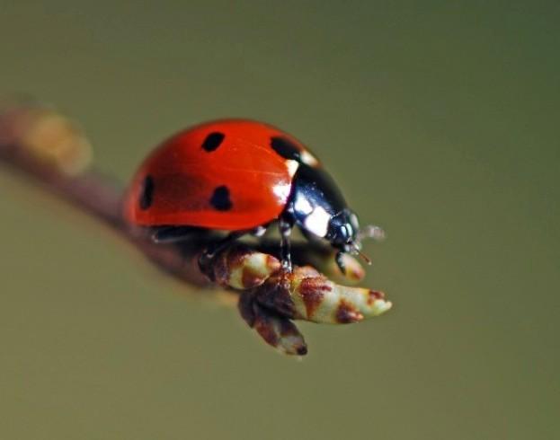 ladybird623_Roberttrevissmith-6a34932
