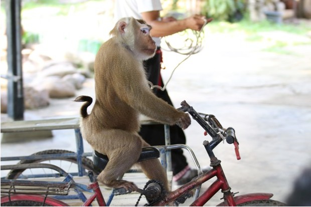 monkey_worldanimalprotection_623-b6a72a5
