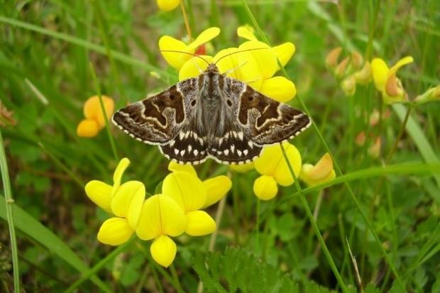 moth_StephenFarhall_623-ea96b3a
