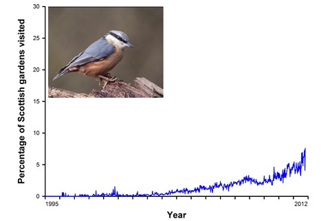 nuthatch_graph_resized-9047538
