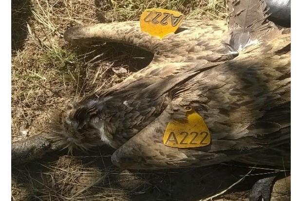poisoned-vultures-closeup_623-904e0aa