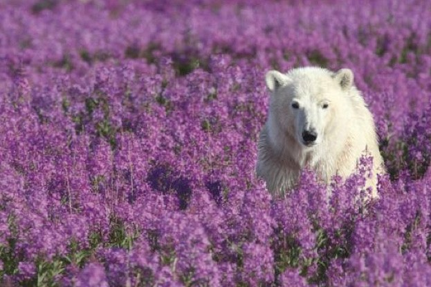 polarbear-484b39d