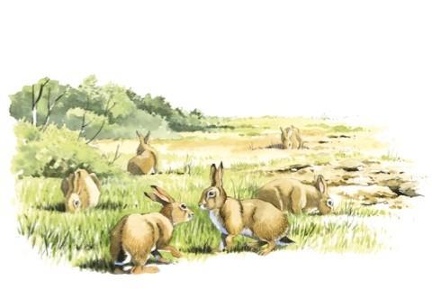 rabbits-bbc_480-bfa4ddc