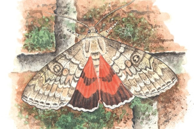 red-underwing-Felicity-Rose-Cole-db6a828