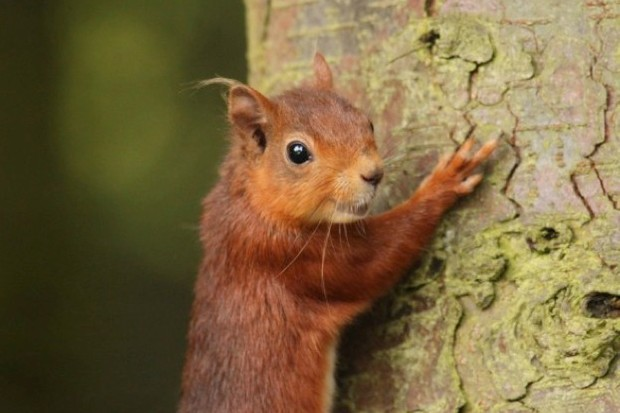 redsquirrel_623_AnnChapman-81b55cf