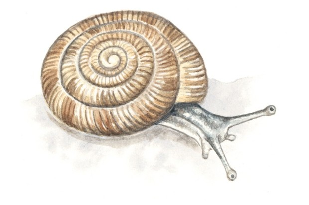 rounded20snail_Felicity20Rose20Cole20-1f83e93