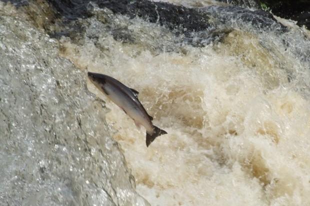 salmon_623-f1d97f3