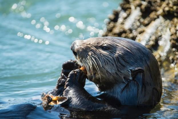 sea-otter-main-0ef6f52