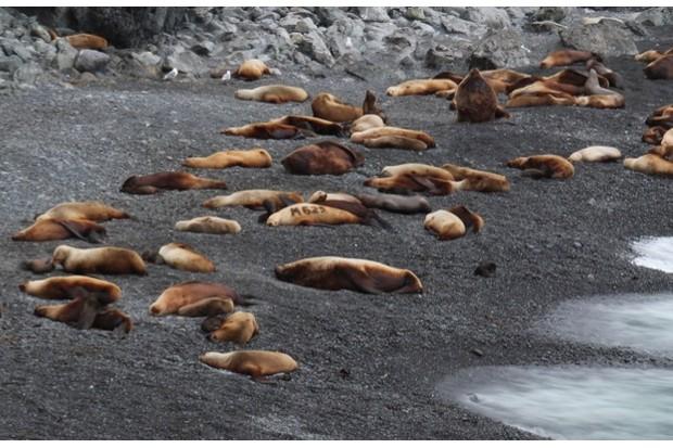 NOAA Fisheries NMFS EPA/MMPA Permit #: 18528 IUCN # A/NW2013-2