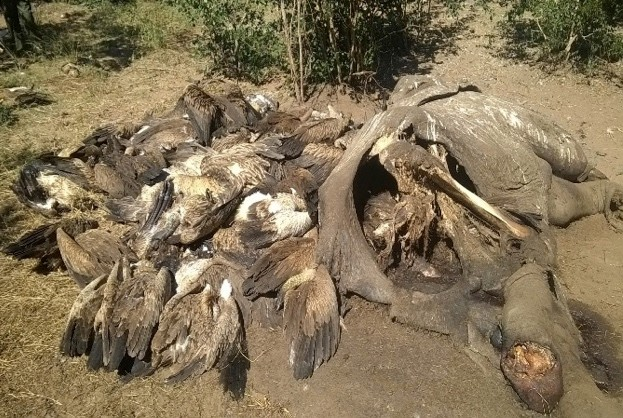 site-of-poisoned-vultures-and-elephant-carcass_623-5580695
