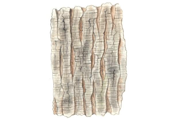 Small-leaved lime tree bark
