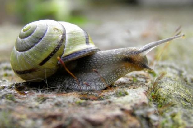 snail_chrisgreen_623-489661f