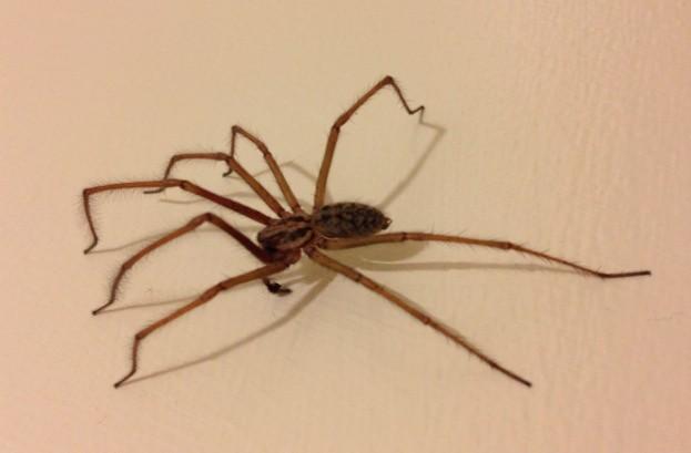 spider_jo_623-953e675