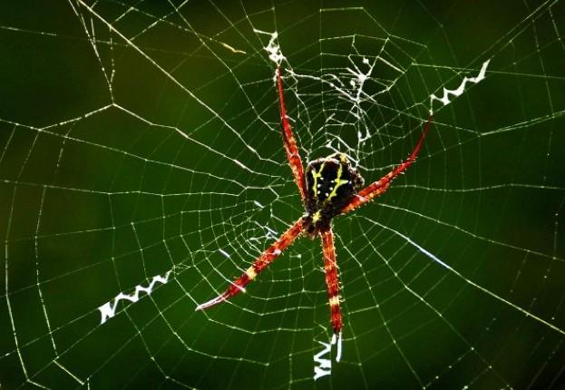 spider_pranabbasak_623-49a6f5d