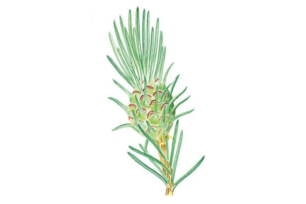 spruce20pineapple20Felicity20Rose20Cole-9c10188