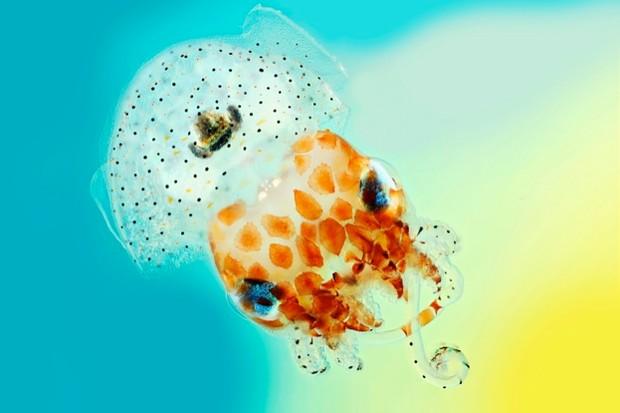 squid623-c482145