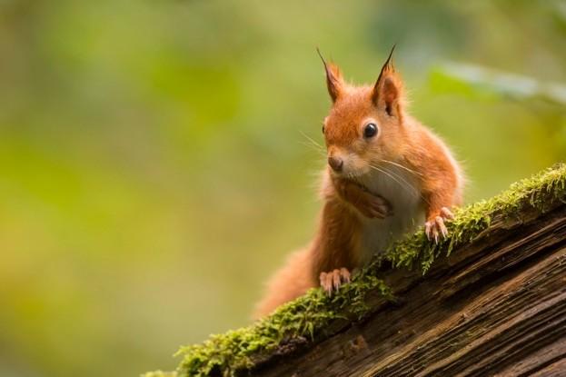 squirrelmain-1a43c53