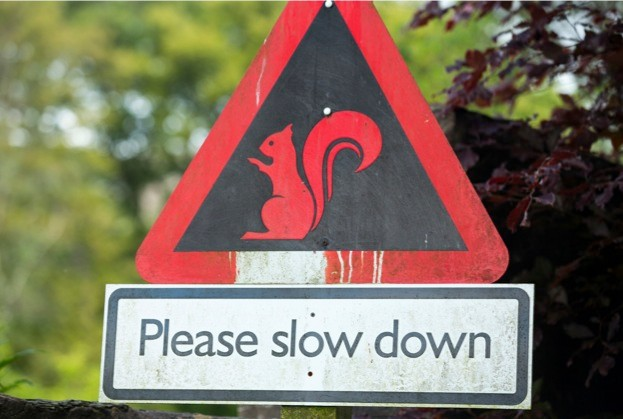 A Red Squirrel warning notice near keswick.