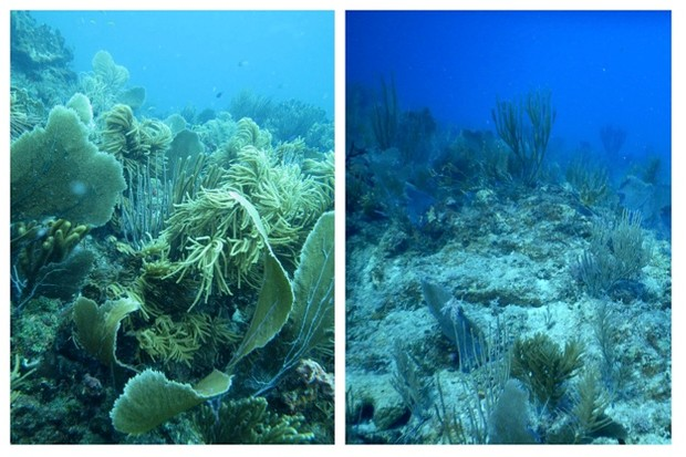 st-john-reef-before-after_623-91a67f7