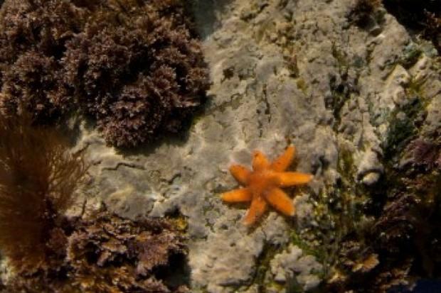 starfish_623_jackperks-2b73015