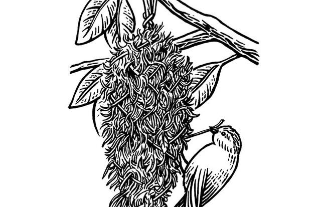 Illustrations by Alan Batley