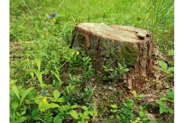 stump_bibikoff_iStock_623-37b6be9