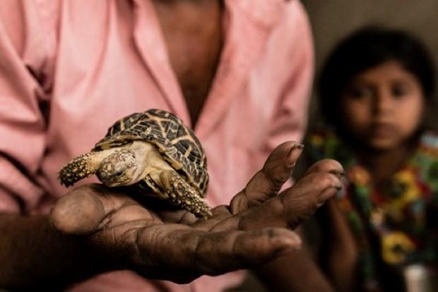 tortoises_neildcruze_623-c373358