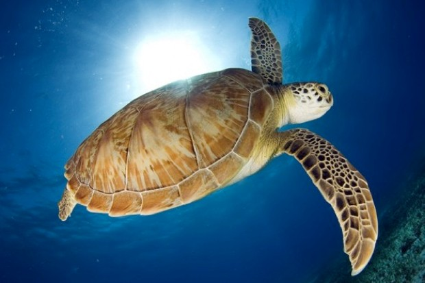 turtle_EdmondLeung_623-8416fe6