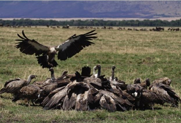 vultures_iStock_mogens-trolle_623-f4cdb19